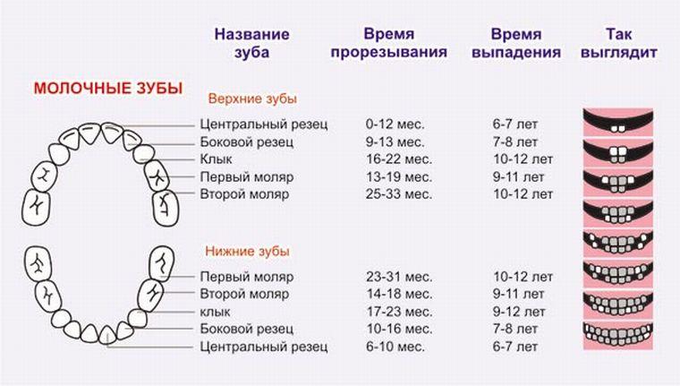 кореные и молочные зубы
