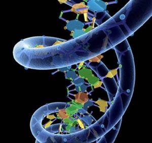 модификация гена
