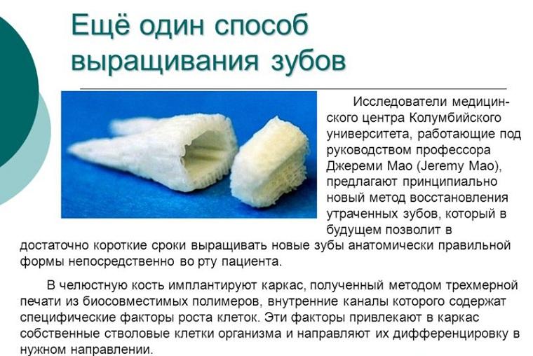 Способ выращивания зубов