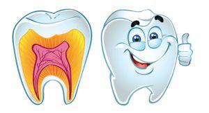 зубы и строение