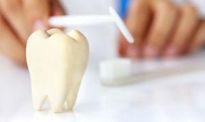 зуб наглядно