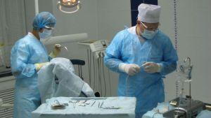Стоматологи-хирурги