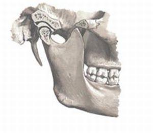Анатомия ВНЧС