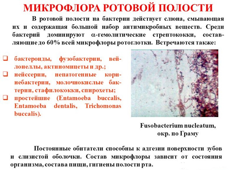 микрофлора во рту