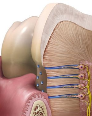 Проникновение пероксида водорода в ткани зуба