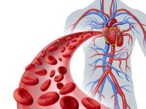 Циркуляция крови