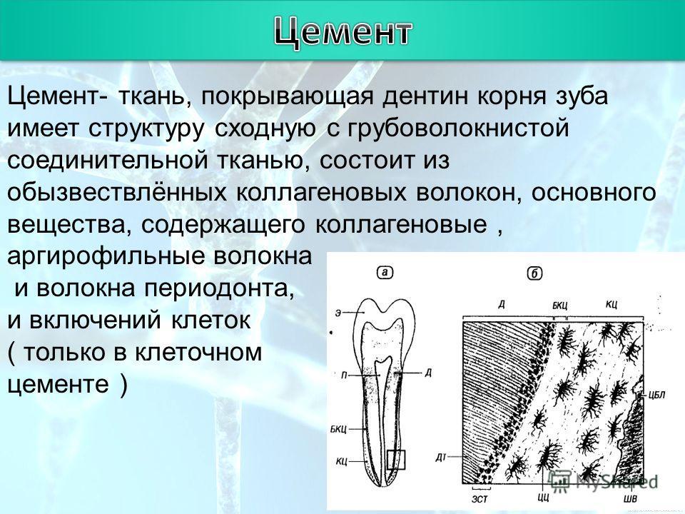 Цемент зубов