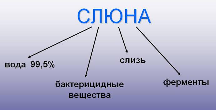 Состав слюны