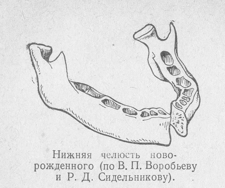 Нижняя челюсть новорожденного
