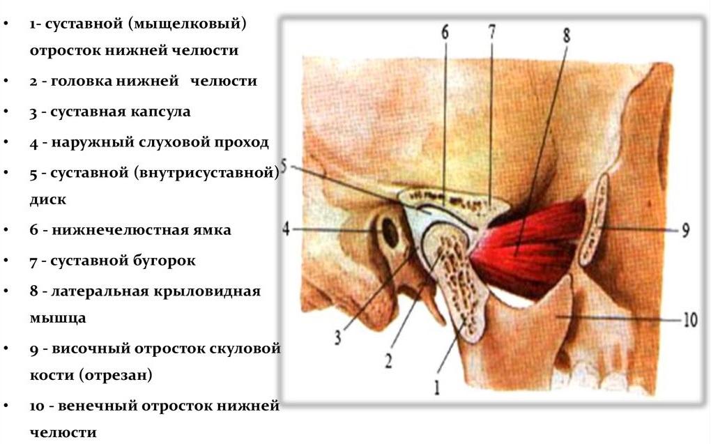 Схема сустава