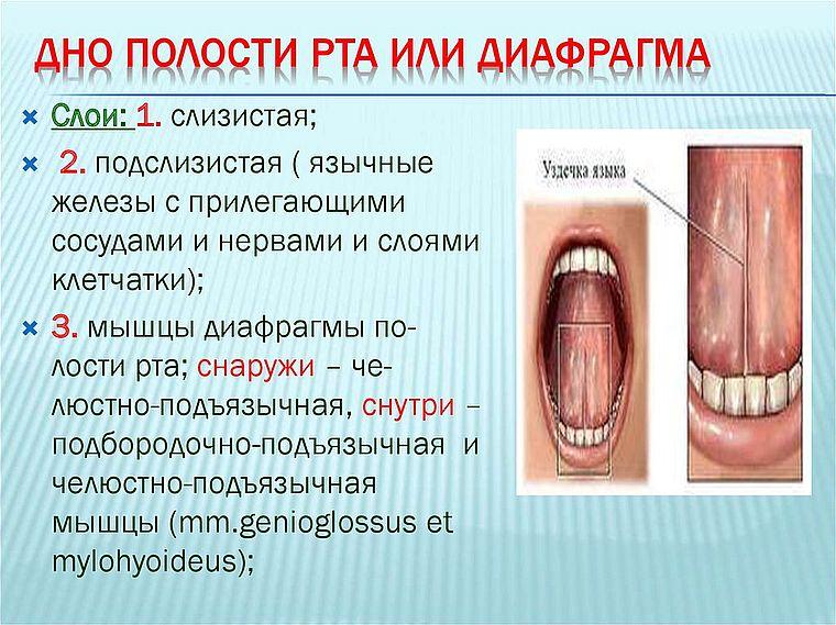 диафрагма полости рта