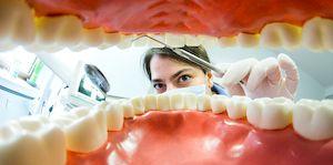 регенерация зубов