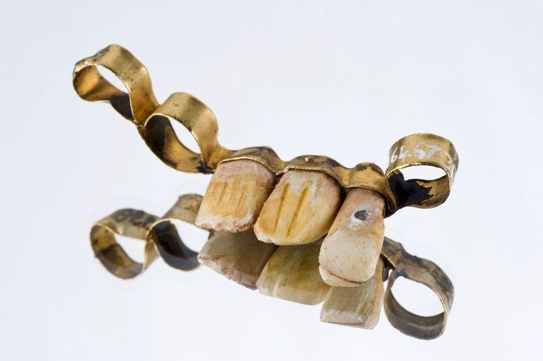 протез с зубами животного