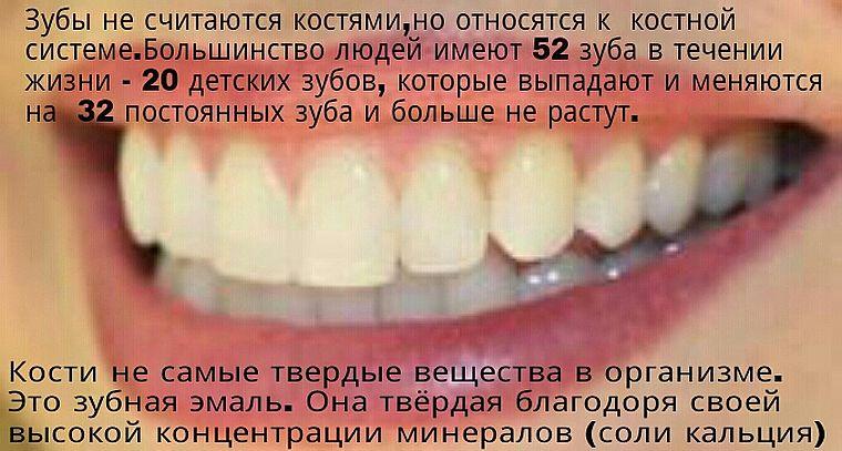 факты о количестве зубов