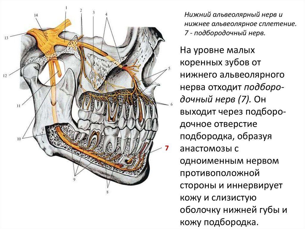 Подбородочный нерв