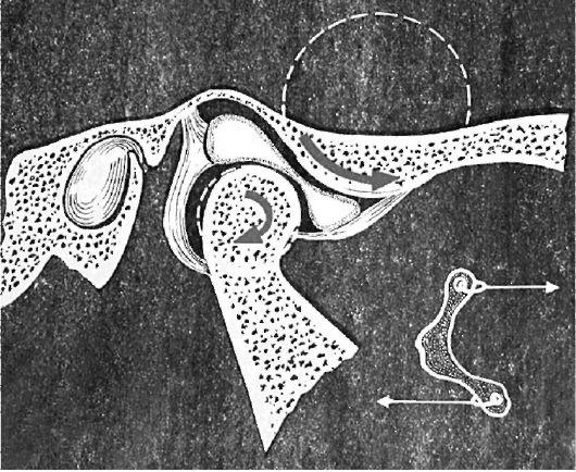 Поступательные движения головок нижней челюсти
