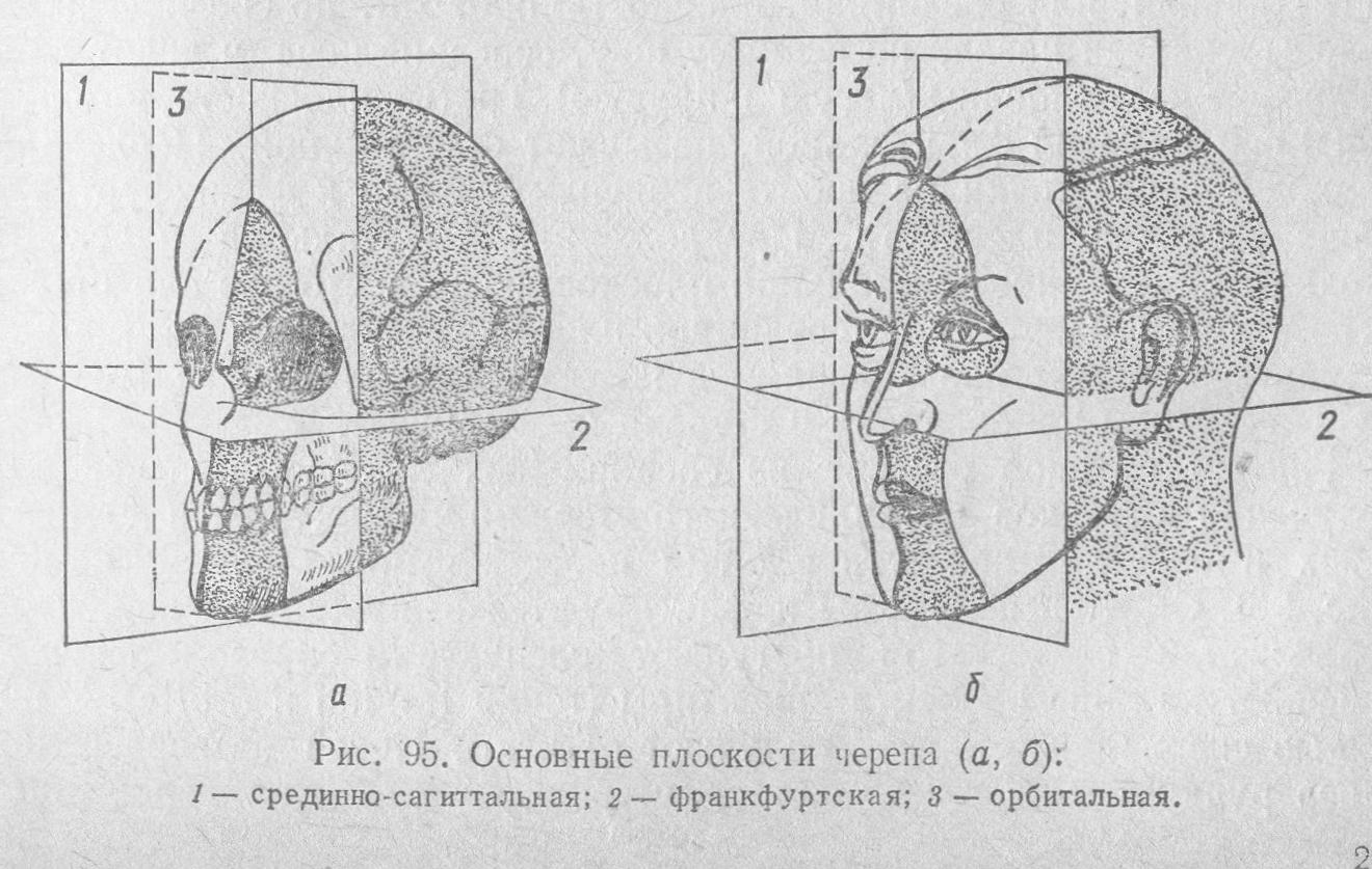 Плоскости черепа